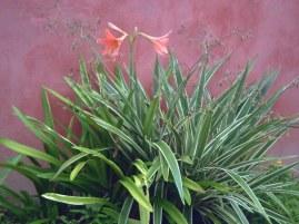 bunga september